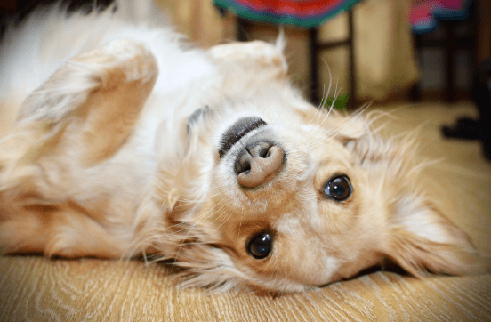 Selecting a Doggy Daycare in Northlake