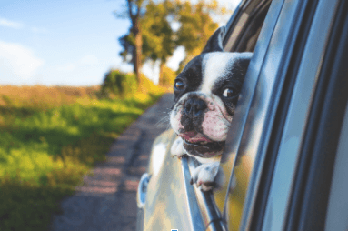 3 Tips to Deal with Your Dog's Motion Sickness